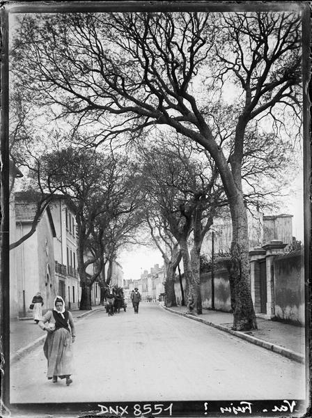 Vue perspective d'une rue ombragée de platanes