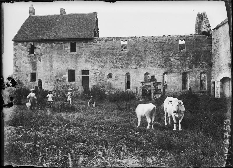 Bâtiments en ruines, vaches au premier plan