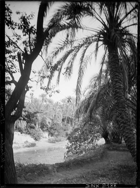 Vue plongeante sur l'oued à travers les palmiers