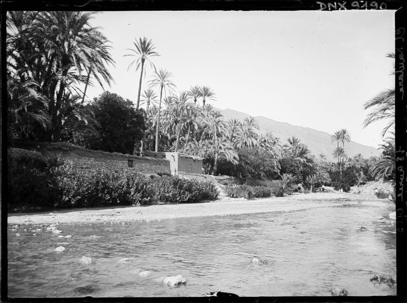 Maisons et palmiers au bord de l'oued