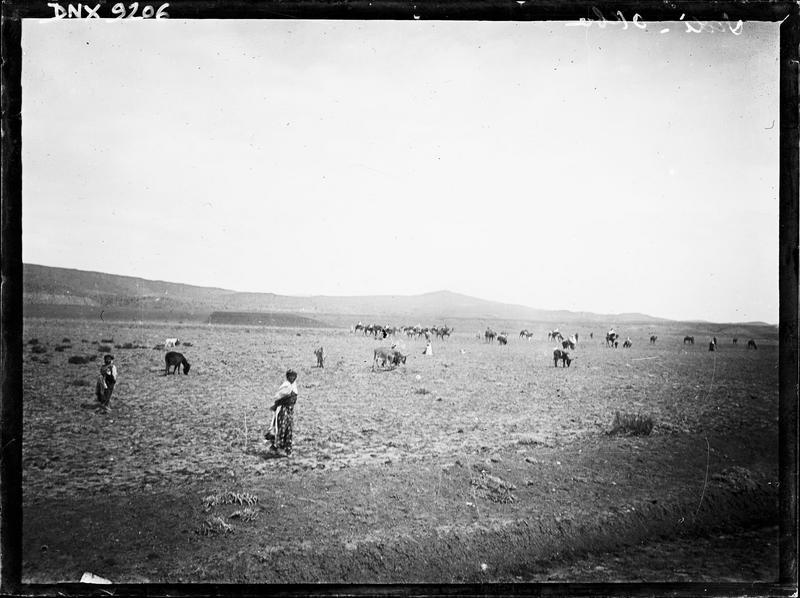 Troupeaux dans la campagne
