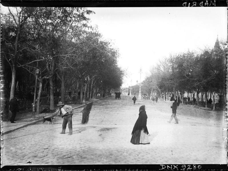 Avenue bordée d'arbres et ornée de grands réverbères