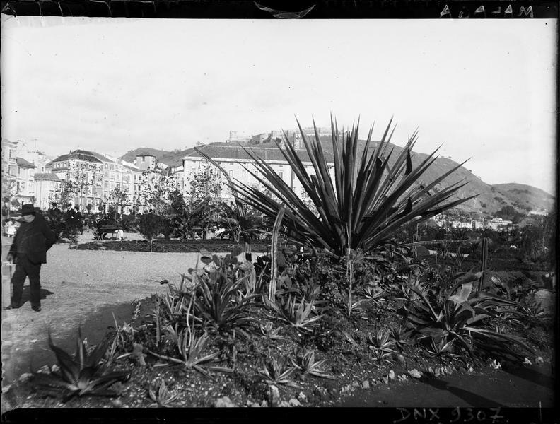 Parc : végétation tropicale