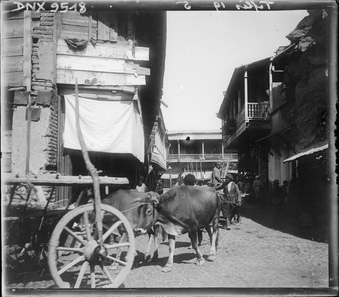 Attelage de boeufs dans la vieille ville