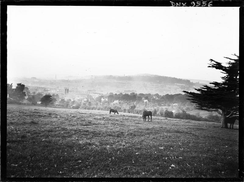 Paysage rural : deux chevaux au pâturage