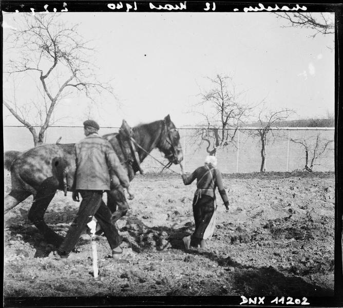 Deux personnes guidant un cheval de labour attelé