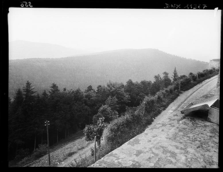 Panorama de pentes boisées pris du mont Sainte-Odile