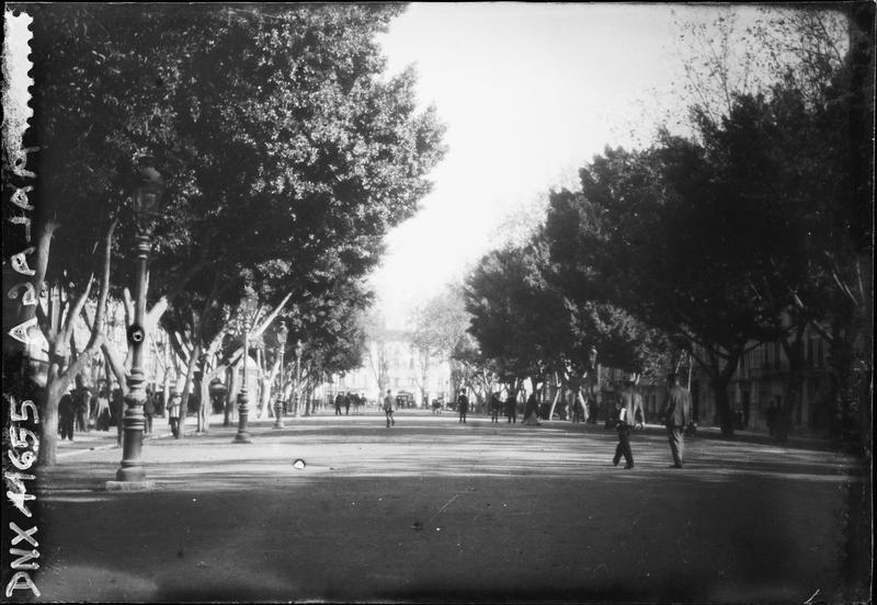 Avenue bordée d'arbres