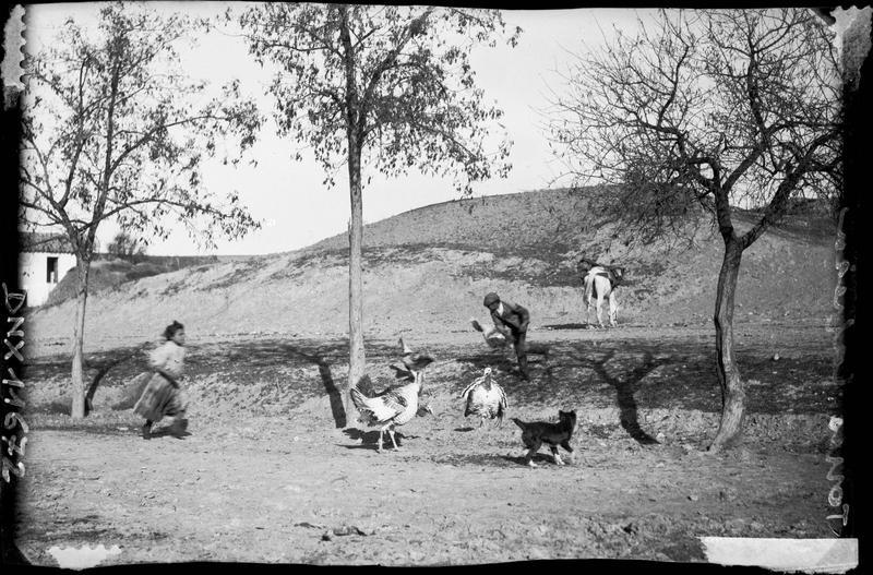 Villageois nourrissant des dindons