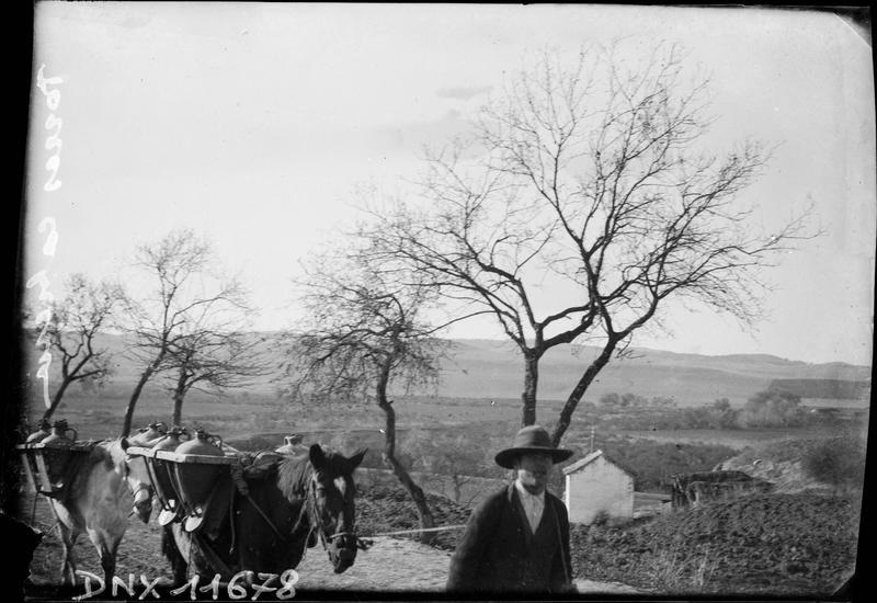 Homme guidant deux mulets chargés de jarres