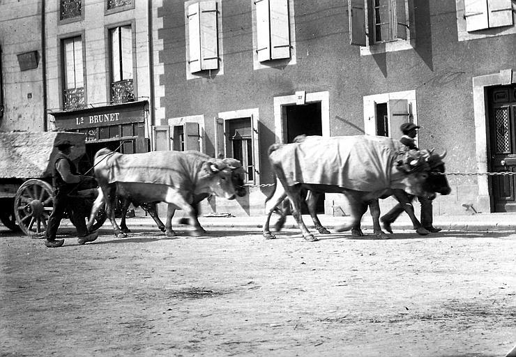 Boeufs tirant une charrette dans une rue de la ville