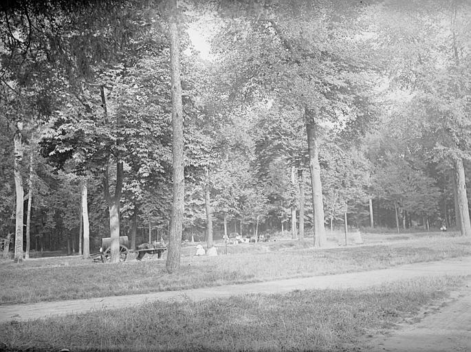 Datation forestière