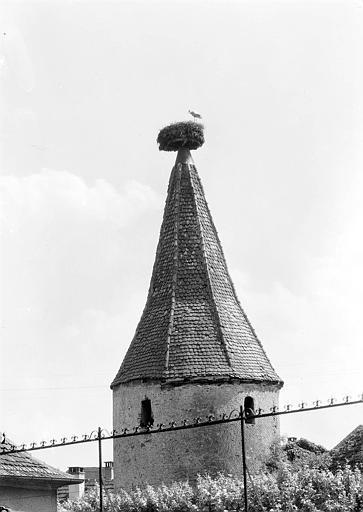 Sommet de la Tour : nid de cigognes