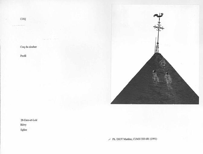 Coq du clocher. Profil