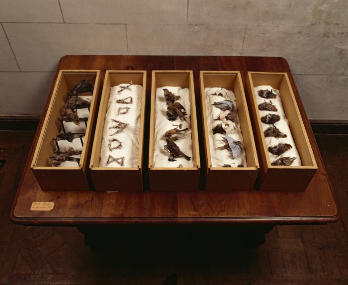 Boîtes : Les Pensionnaires (Le repos, La punition, L'alphabet, La promenade, Le nom des pensionnaires), œuvre en 5 éléments