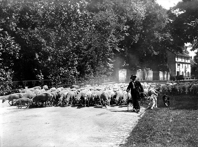 Scène de campagne, la traversée d'un village : le berger et ses chiens de conduite avec le troupeau de moutons