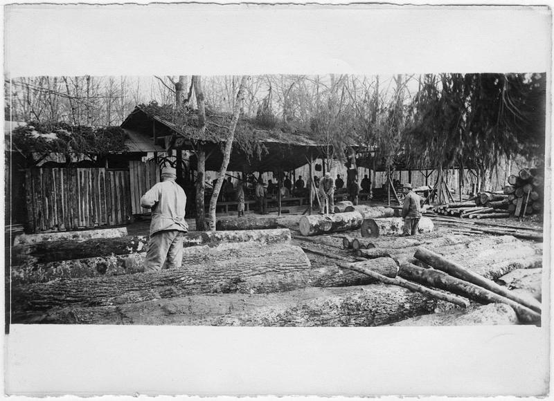 Exploitation forestière dans la forêt de Mondon près de Lunéville. Une scierie