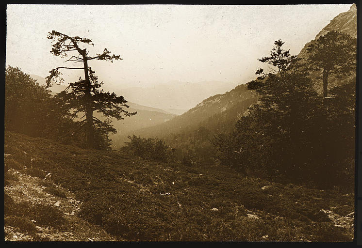 La forêt d'Aïtone vue du col de Vergio
