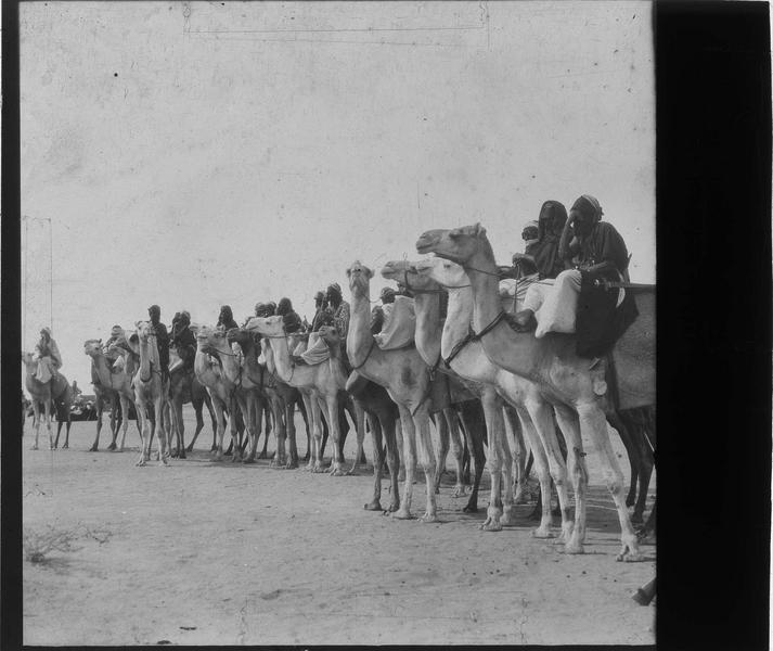 Touaregs à dos de chameaux
