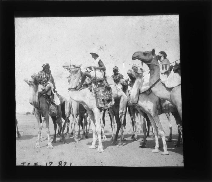 Groupe d'autochtones et femme à dos de chameaux dans le désert