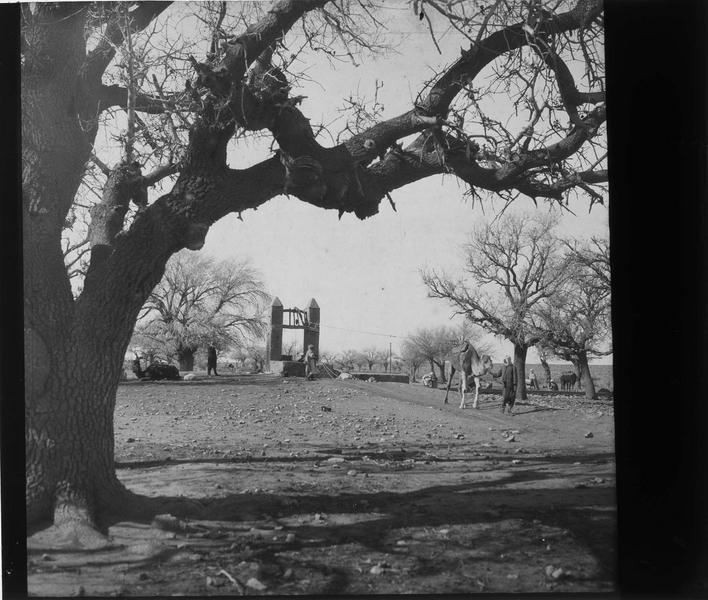 Chameau tirant l'eau d'un puits près d'une culture de betoum (pistachier), vue animée