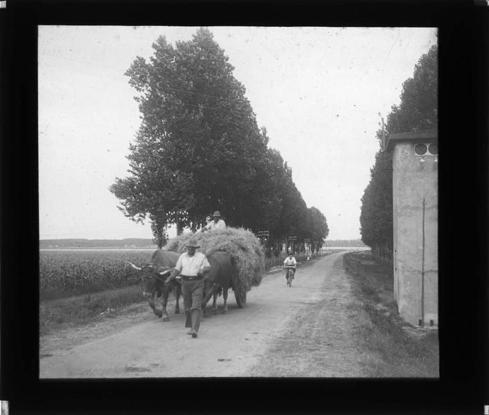Paysans rentrant de la moisson avec une charrette à boeufs
