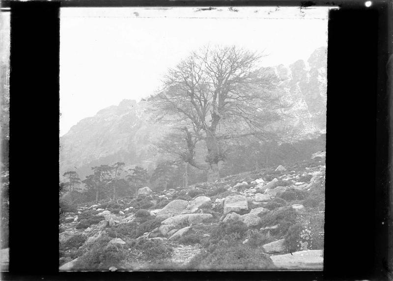 Montagne et forêt en arrière-plan dans le col de Vergio