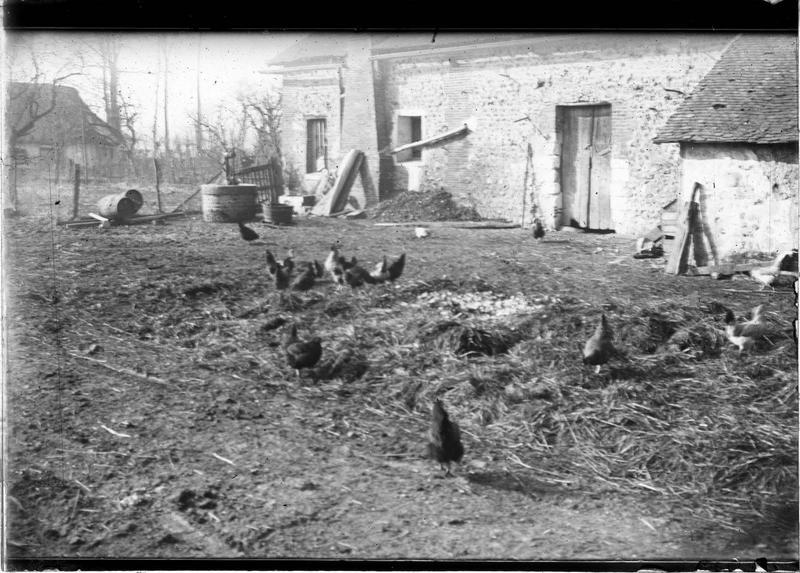 Cour avec poules