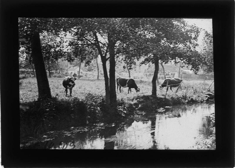 Prairie avec vaches en bordure de l'Eure