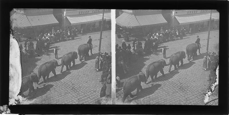 Défilé d'éléphants sur le quai animé
