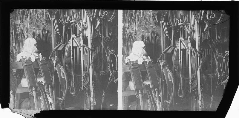 Intérieur : présentoirs avec harnais, sangles