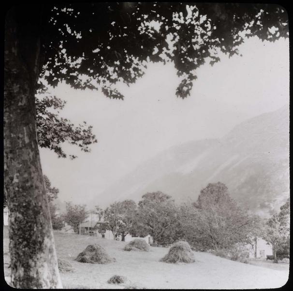 Champ et arbres dans la montagne