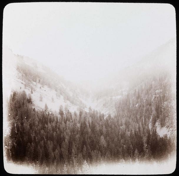 Forêt montagneuse