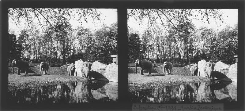 Eléphants près d'un bassin