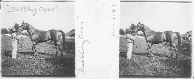 Bubbling Over (1923), cheval de course d'origine américaine à robe alezan vu de profil et homme dans un pré. Pedigree : North Star (1914) et Beaming Beauty (1917)