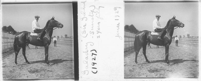 Galaday (1927), cheval de course d'origine américaine à la robe baie vu de profil et jockey sur un champ de course. Pedigree : Sir Gallahad (1920) et Sunstep (1916)