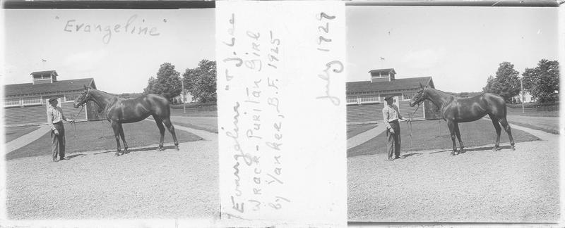 Evangeline (1925), cheval de course vu de profil et homme dans une cour. Pedigree : J. Lee Wrack et Puritan Girl