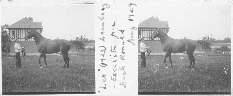 Lex (1923), cheval de course d'origine anglaise à la robe baie vu de profil et homme dans un pré. Pedigree : Lemberg (1907) et Excelita (1914)