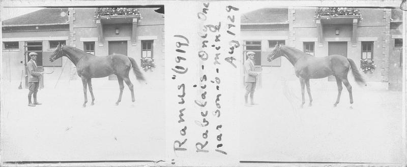 Ramus (1919), cheval de course d'origine française à la robe baie vu de profil et homme devant une maison. Pedigree : Rabelais (1900) et Only One (1914)