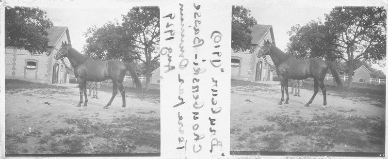 Bruleur (1910), cheval de course d'origine française à la robe baie vu de profil près d'une écurie. Pedigree : Chouberski (1902) et Basse Terre (1899)