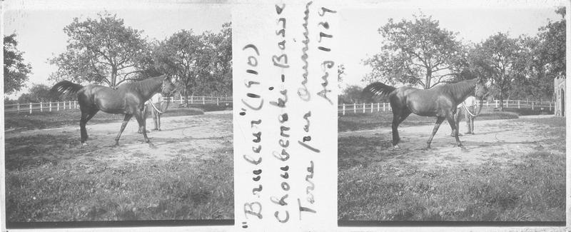 Bruleur (1910), cheval de course d'origine française à la robe baie trottant près d'une écurie. Pedigree : Chouberski (1902) et Basse Terre (1899)
