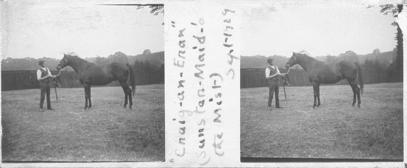 Cnaig-an-Eran (1918), cheval de course d'origine anglaise à robe baie vu de profil et homme dans un pré. Pedigree : Sunstar (1908) et Maid of the Mist (1906)