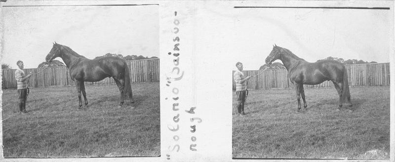 Solario (1922), cheval de course d'origine anglaise à robe baie vu de profil et homme dans un pré. Pedigree : Gainsborough (1915) et Sun Worship (1912)