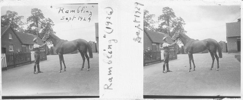 Rambling (1926), cheval de course vu de profil et homme dans une cour. Pedigree : Charles O'Malley (1907) et Wild Captive