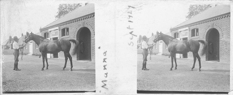 Manna, cheval de course vu de profil et homme devant une écurie
