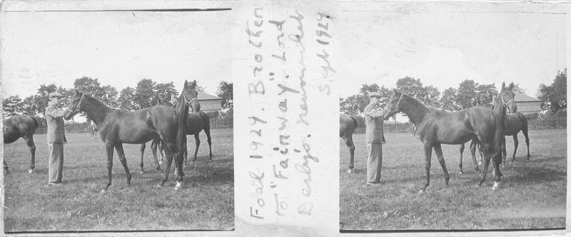 Foal (1929) et Brother, chevaux de course vus de profil et homme dans un pré