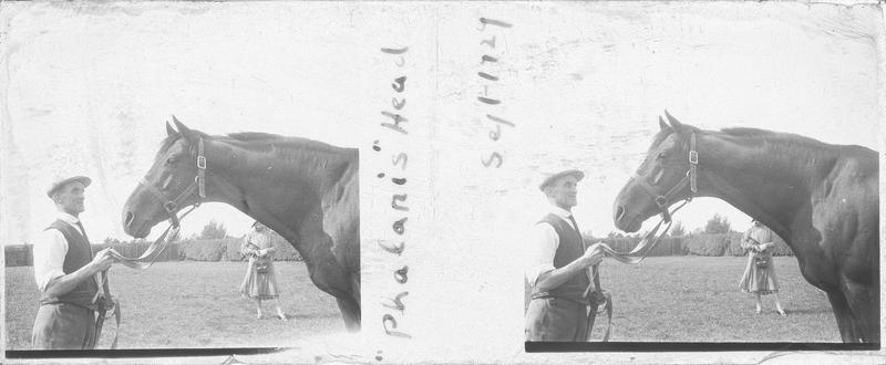 Tête de Phalaris (1913), cheval de course d'origine anglaise à robe baie vu de profil et homme dans un pré. Pedigree : Polymelus (1902) et Bromus (1905)