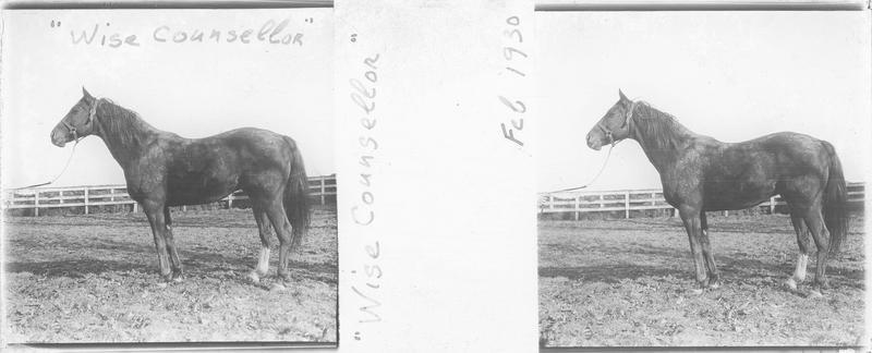 Wise Counsellor (1921), cheval de course d'origine américaine à robe alezan vu de profil dans un pré. Pedigree : Mentor (1906) et Rustle (1905)