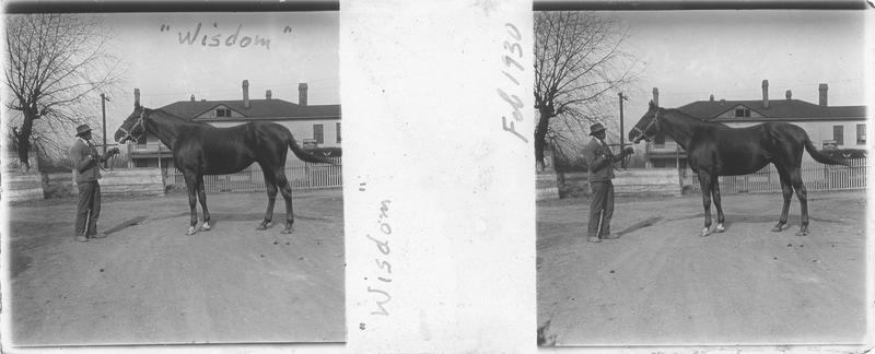 Wisdom (1925), cheval de course d'origine américaine à robe alezan vu de profil et homme devant une maison. Pedigree : High Time (1916) et Sagacity (1918)