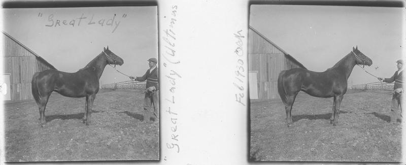 Great Lady, cheval de course vu de profil et homme à côté d'un hangar